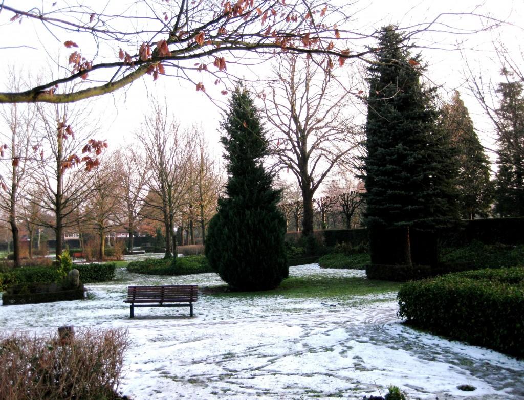 Det mystiske naturfænomen på Fredens Kirkegård ses midt mellem de to store grantræer.