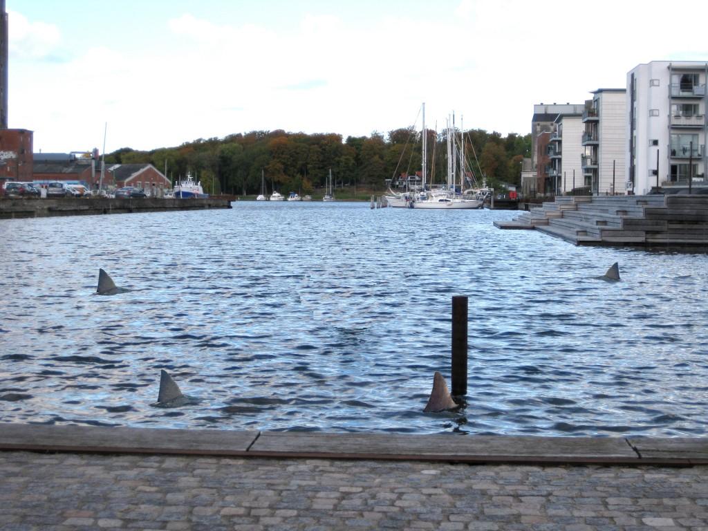 hajer i odense havn